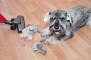 how-can-i-control-the-dog-hair-in-my-house